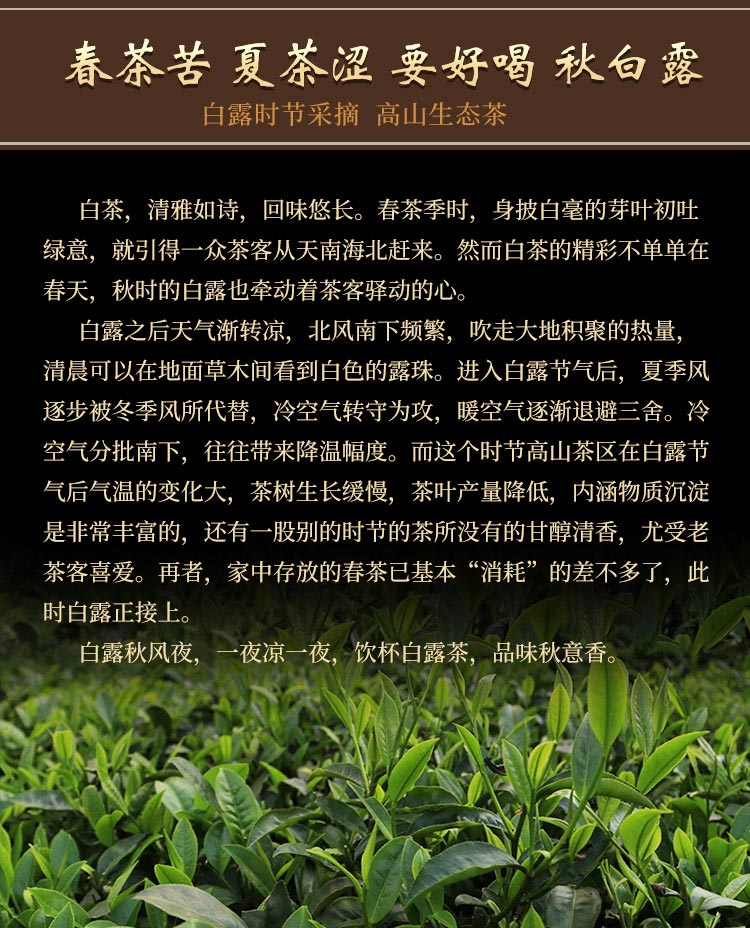 白露茶_02.jpg