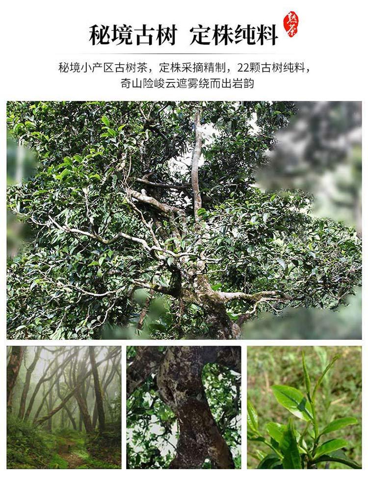 2005年秘境古树陈香普洱熟茶_03.jpg