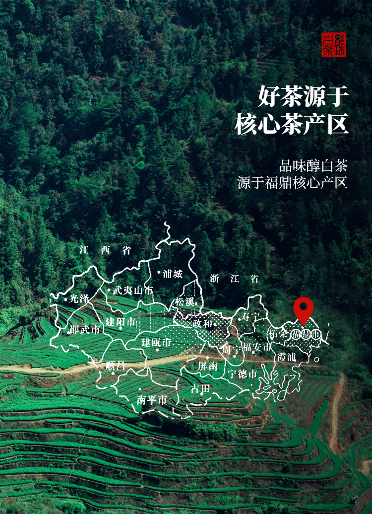 BaiChaLongZhu_02.jpg