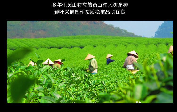 太平猴魁1_04.jpg