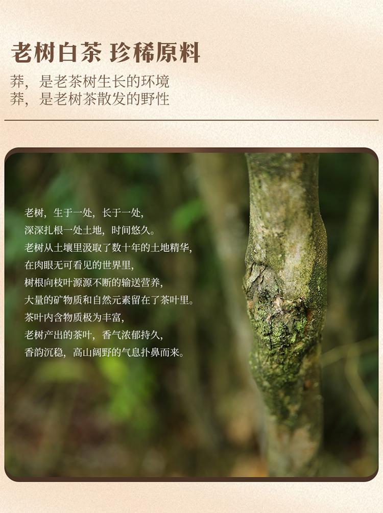 老树寿眉_02.jpg