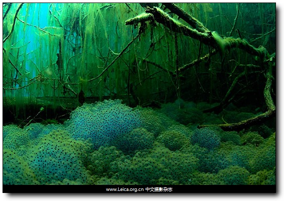 『摄影奖项』2010年度自然环境摄影师奖