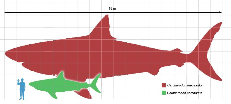 便宜鲨鱼海洋_海洋猎人展 — 地球的丰饶未来 - 每日环球展览 - iMuseum