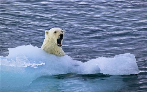 Win7官方主題《北極熊》下載(共6張壁紙) | 愛軟客