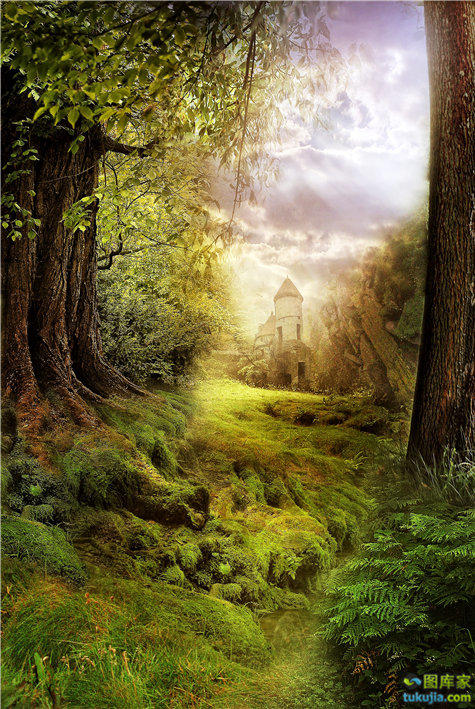 森林 树林 神秘森林 秘境 幻想世界 梦幻世界 JPG41
