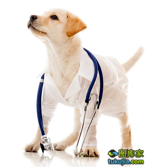 兽医 宠物 宠物医院 动物医院 狗狗 宠物医疗 JPG37