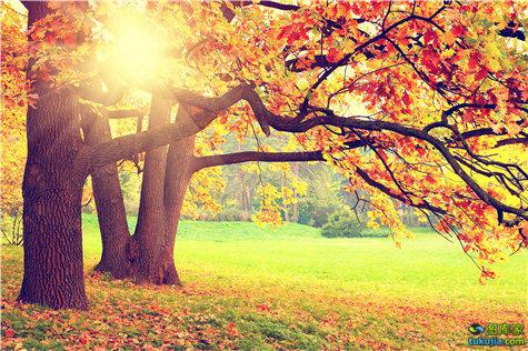金秋 秋天 落叶 枯叶 黄叶 树林 金秋景色 秋季风景 深秋 红叶 JPG771
