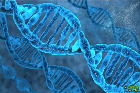 基因 DNA 医疗 医学 遗传学 遗传基因 基因图 基因图片 医疗科学 遗传学 1081