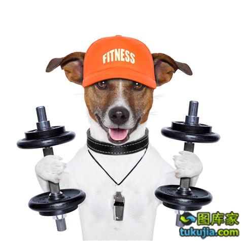 小狗 狗狗 宠物 DOG 创意广告 创意设计 JPG33